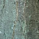 Colori corteccia di un albero