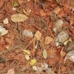 Foglie d'autunno come i colori dei cubetti